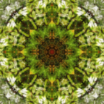image de kaléidoscope dans les tons verts
